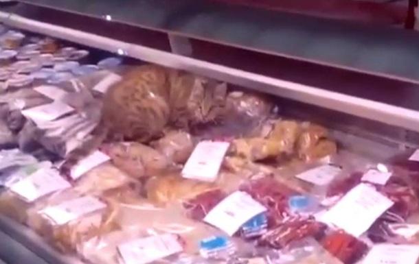 Рудий кіт з Владивостока, розорив рибний магазин на тисячу доларів