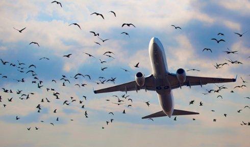 АТО спростовує інформацію про прибуття літаків НАТО