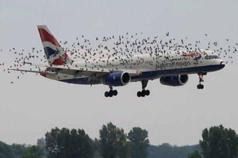 В американский пассажирский самолёт врезалась птица