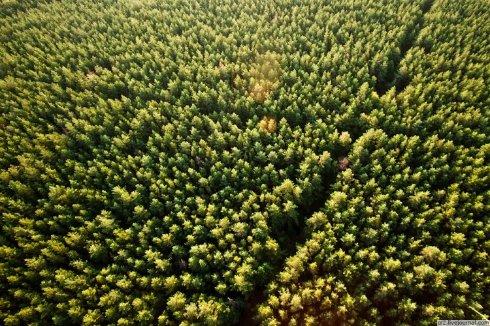 Cтарые бомбардировщики могут высаживать до 900 тысяч деревьев в день