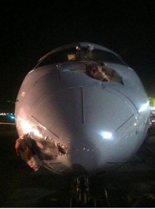 Птицы против самолетов