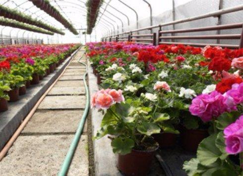 Бизнес по выращиванию цветов
