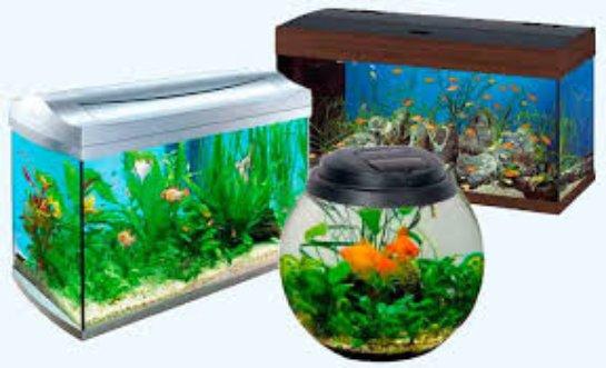Какой аквариум выбрать?