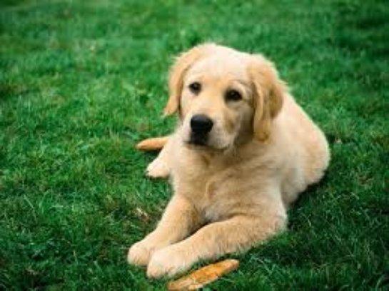 Собака – особенности характера