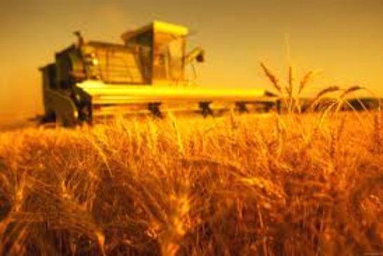 Масштаб сельского хозяйства
