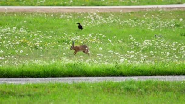 В июле зафиксировано 3 столкновения самолетов с зайцами