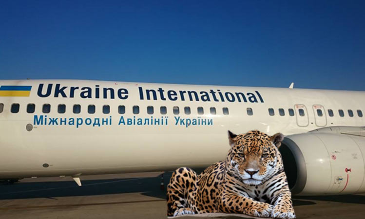МАУ перевезла в Дубай необычных пассажиров