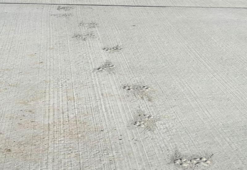 Cчетной Палате не понравился ремонт аэропорта Херсон