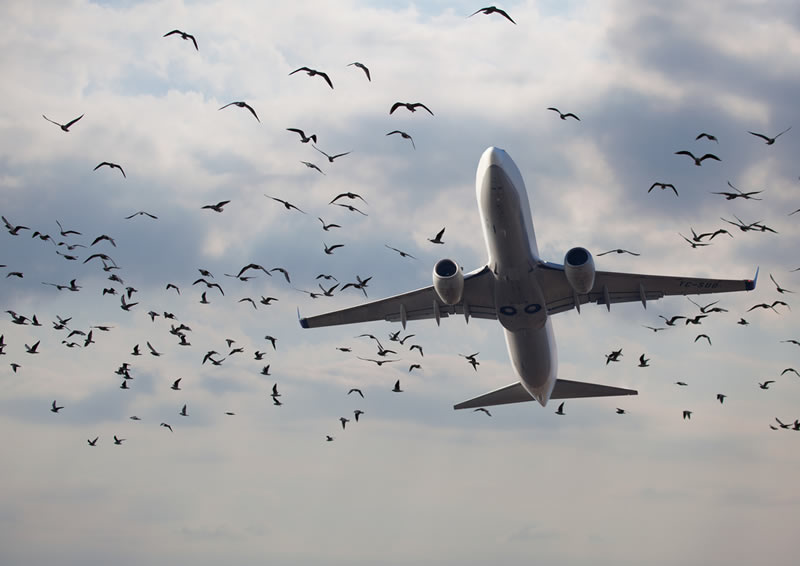 В сентябре произошло 10 авиационных инцидентов и аварий