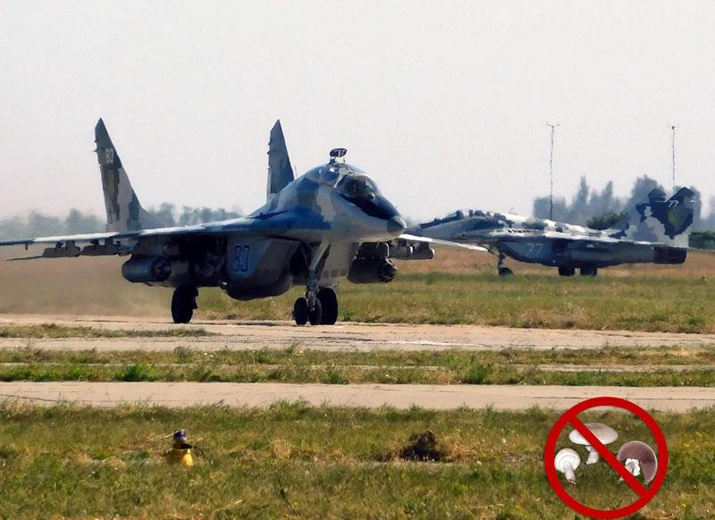 Командование Воздушных Сил попросило не собирать грибы на аэродромах