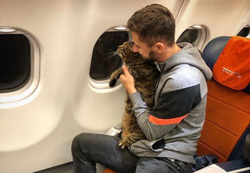 Авиакомпания аннулировала бонусные мили пассажира, который не сдал в багаж кота