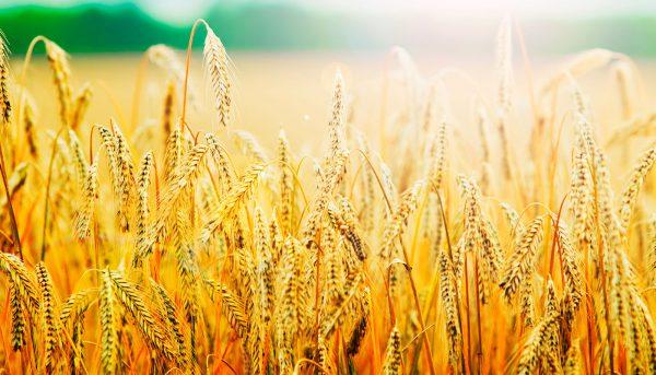 Покупка, продажа или аренда аграрно-промышленного бизнеса