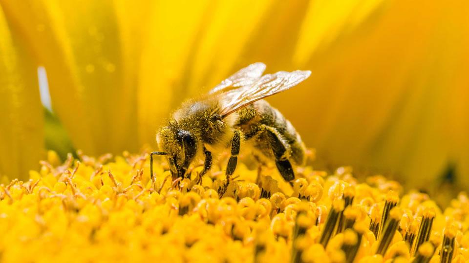 Bees Airline будет заниматься чартерными перевозками