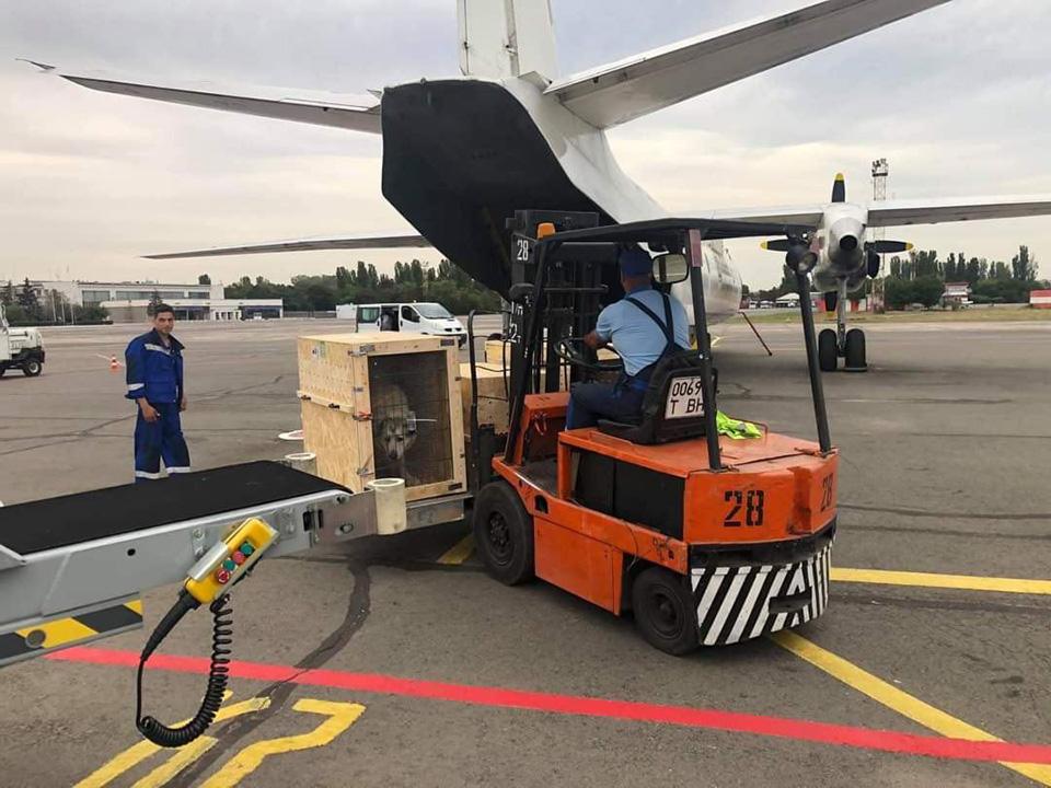 Авиакомпания Элерон впервые перевезла животных
