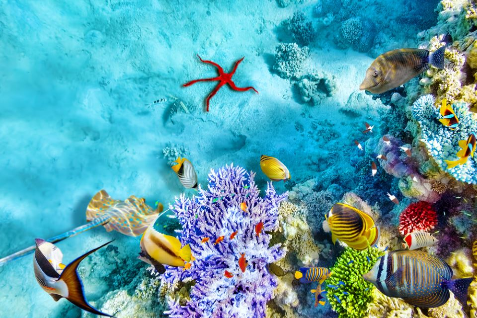 flydubai возобновляет рейсы на Мальдивы с 27 октября