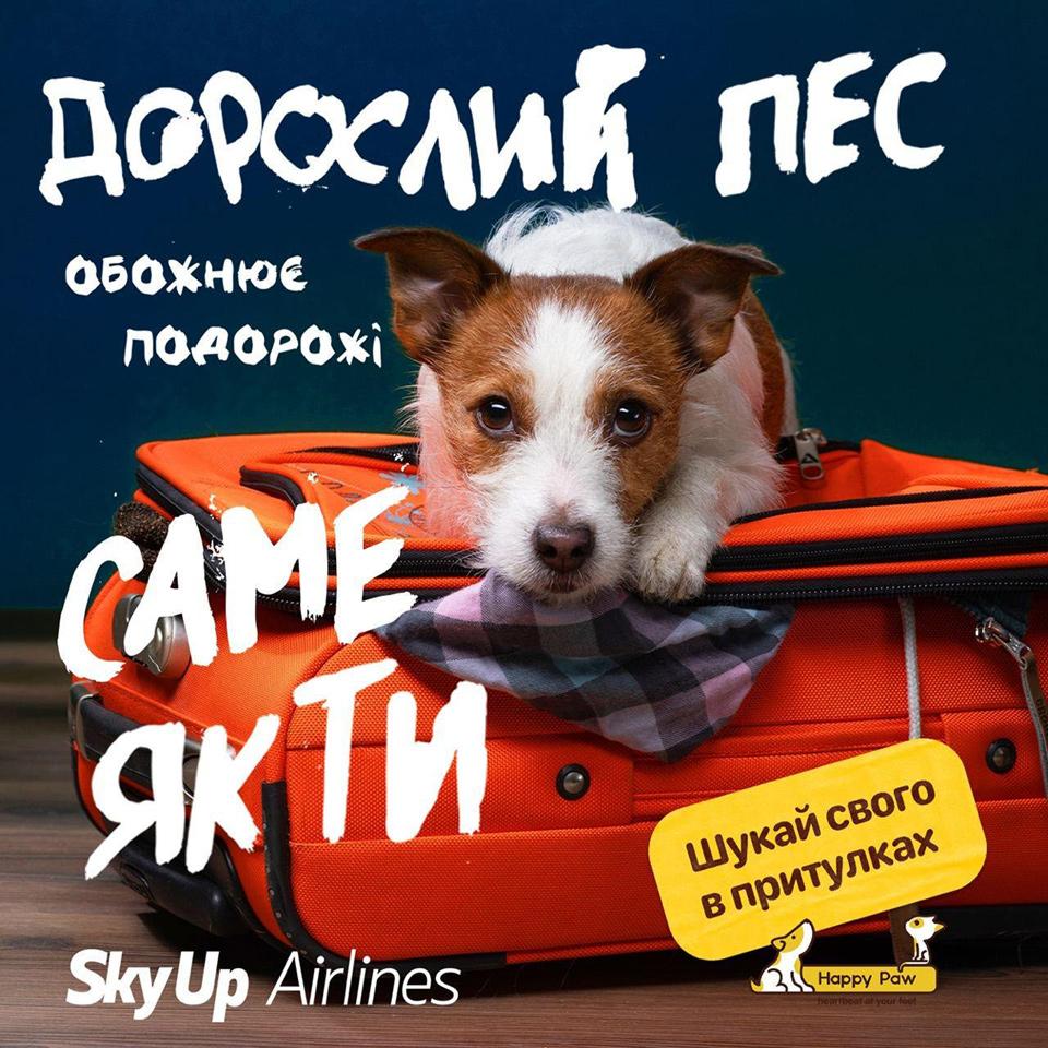 Ко Дню защиты животных: SkyUp присоединяется к кампании Happy Paw «Ищи своего в приютах»