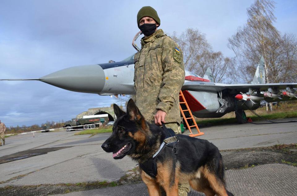 Собаки на службе в авиации