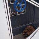 В аэропорт Запорожье приблудилась енотовидная собака