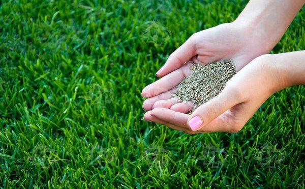 Большой выбор качественных семян травы для газона