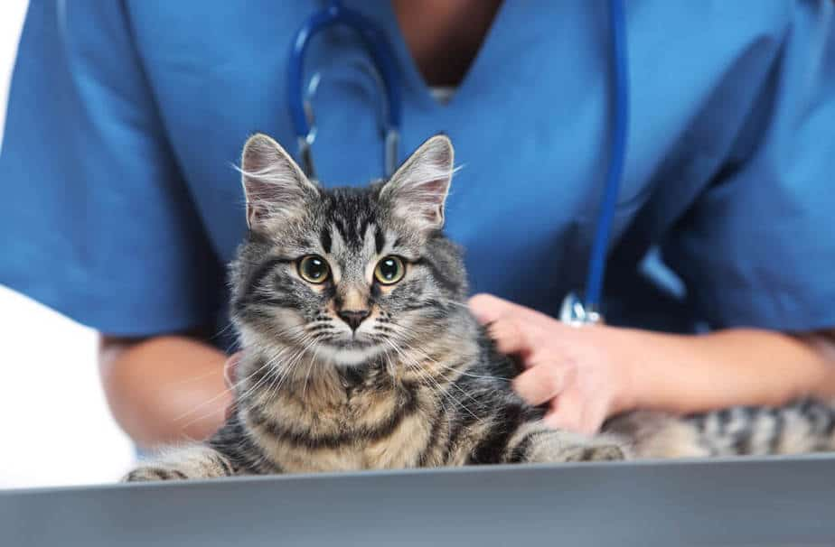 Профессиональная кастрация котов и собак